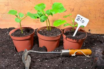 Gärtner Pflanzen Anzucht Erde Bio