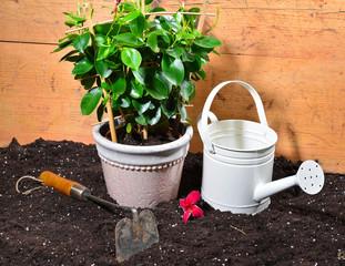 Kanne  Pflanzen Anzucht Erde