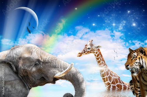 Fotobehang Giraffe animals