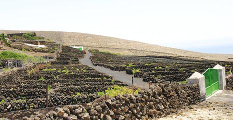 Plantaciones de viñedos en La Geria, Lanzarote, Islas Canarias