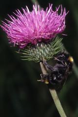 insetto sul fiore