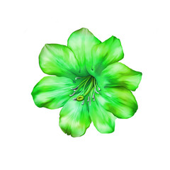 Beautiful bright green Flower. Isolated on white. Illustration