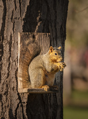 Red Squirrel on a squirrel feeder