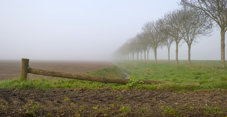 Trees along a foggy field in spring