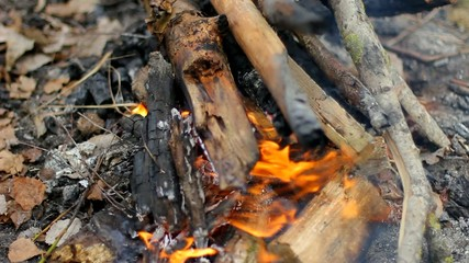A fire in the forest, burning wood and branches