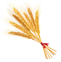 Bunch of wheat on white  background. Vector.