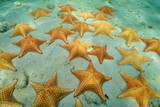 Cluster of starfish underwater on sandy seabed