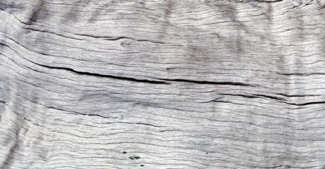fond texture tronc bois sec