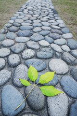 Green leaf with old cobblestone road background