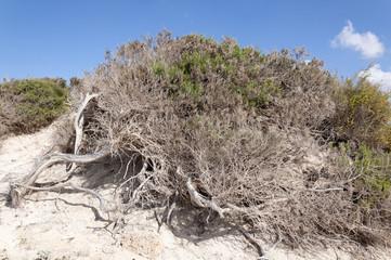 Macchia mediterranea e vento