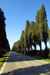 Toscana,viale dei cipressi,Bolgheri,Livorno.