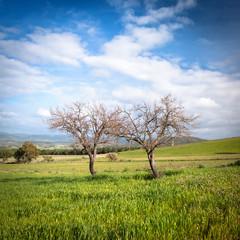 Sardegna, paesaggio di campagna in primavera