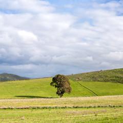 Sardegna, Ortacesus, paesaggio di campagna in primavera