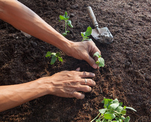people planting young tree on dirt soil with gardening tool use