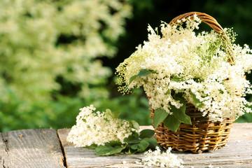 Körbchen mit Blüten des Schwarzen Holunders