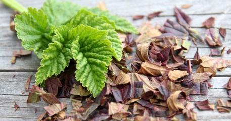 brombeerblätter grün und getrocknet