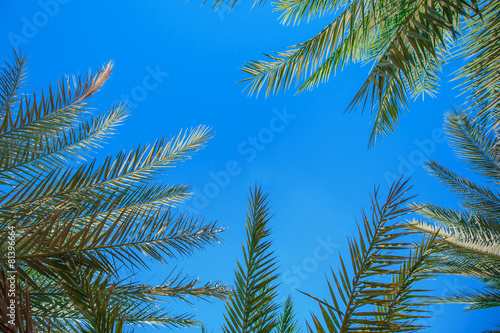 Fotobehang Palm boom Palm leaves against the blue sky