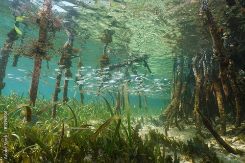 Staande foto Water planten Mangrove ecosystem underwater with school of fish