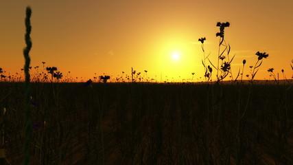 Sonnenuntergang am Kornfeld