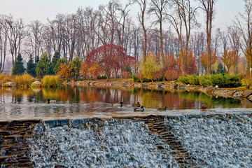 ducks on an autumn pond with cascades