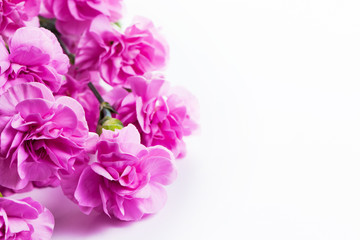 Pink soft spring flowers bouquet on white background