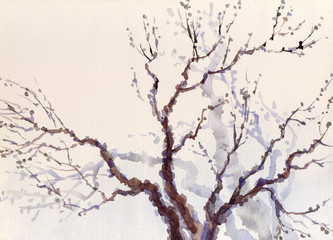 Watercolor landscape. The bare branches of a tree
