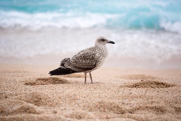 Beautiful Seagull on the beach