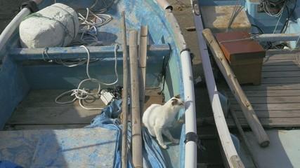 漁港の野良猫
