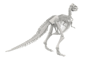 Dinosaur Skeleton isolated on white