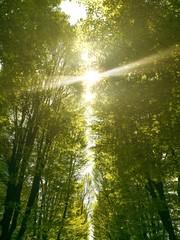 sole che spunta da gli alberi