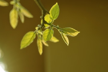 beauty of leaf
