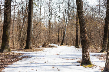 frozen ice path in spring forest