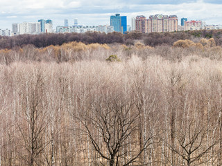 above view of bare trees in spring forest and city