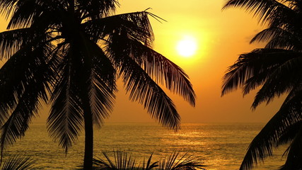 beautiful landscape with tropical sea sunset and palm on foregro