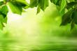 Grüne Natur als Hintergrund - 81404219