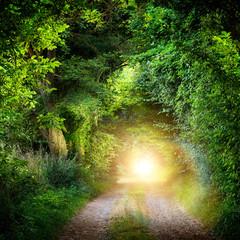 Tunnel aus Bäumen führt ins Licht