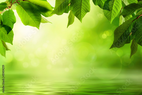 Fotobehang Planten Grüne Natur als Hintergrund