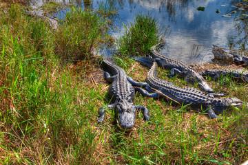 FL-Everglades National Park-Anhinga Trail