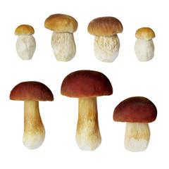 Boletus edilus mushrooms