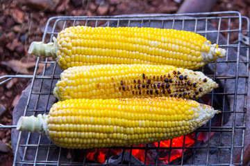 close up corn grill on iron net