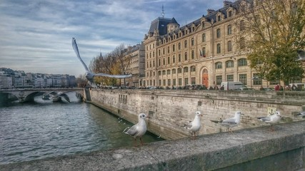 Seagull chilling on a bridge over the Seine, Paris