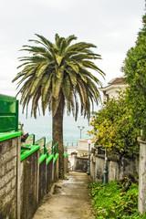 Palm tree in seashore village