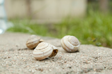 Three snails on the stone with blur grass