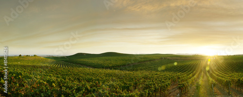 canvas print picture grape outdoor