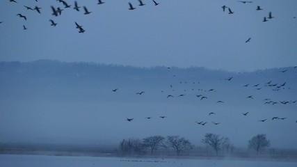 渡り鳥の飛来_8