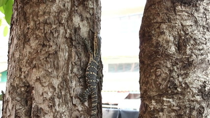 Lizards are climbing up the tree