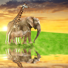 Giraffe, elephant and kudu in the sunset