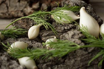 white onion on a gray tree bark