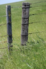 Two Fence Posts