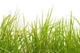 herbe sur fond blanc